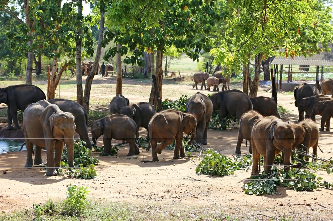 Why Visiting An Elephant Sanctuary In Thailand Is Special